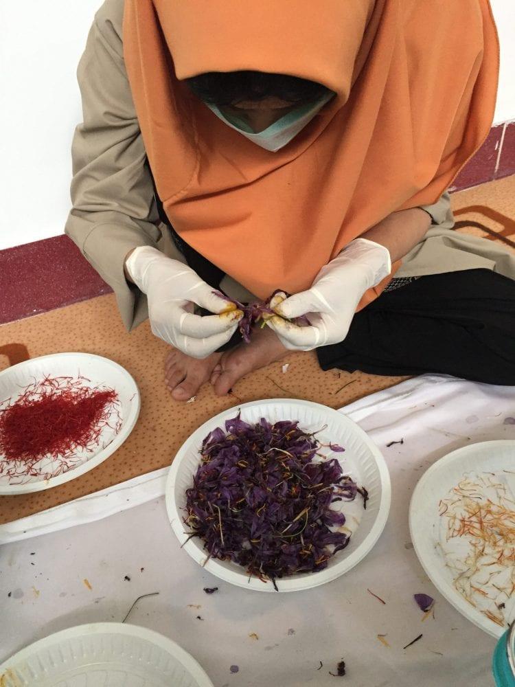 A Rumi Spice worker separating saffron flowers